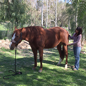 Horse Acupressure Assessment